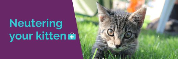 Neutering your kitten