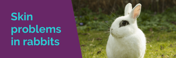 Skin problems in rabbits