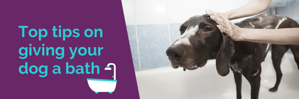 Top tips on giving your dog a bath