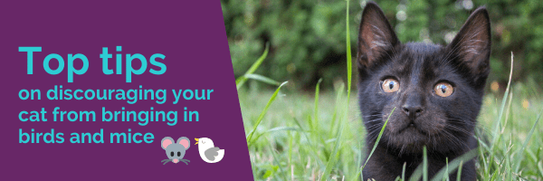 Top tips on discouraging your cat from bringing in birds and mice