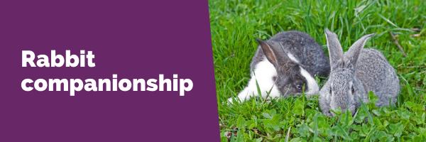 rabbit companionship