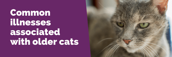 Common illnesses associated with older cats