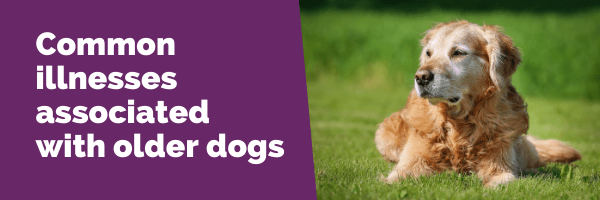 common illnesses associated with older dogs