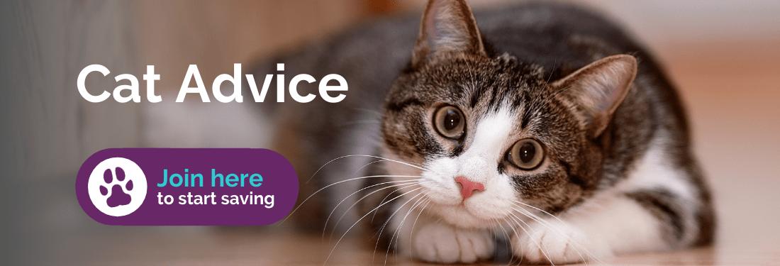 Cat advice