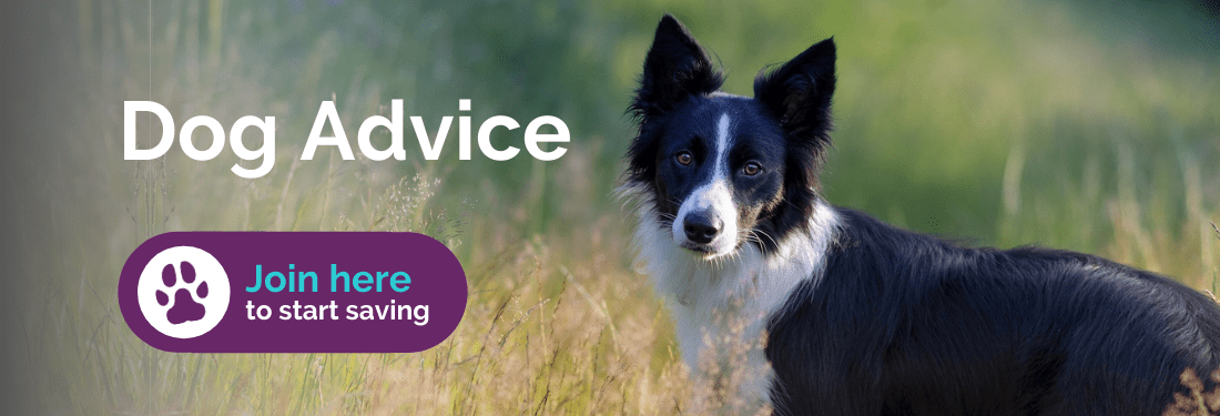 Dog advice