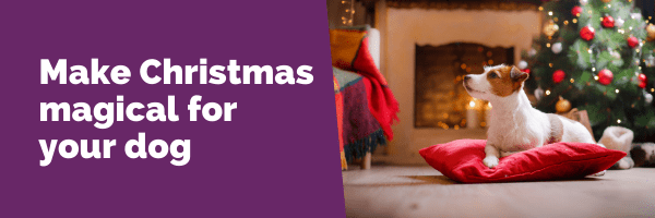 Make Christmas magical for your dog
