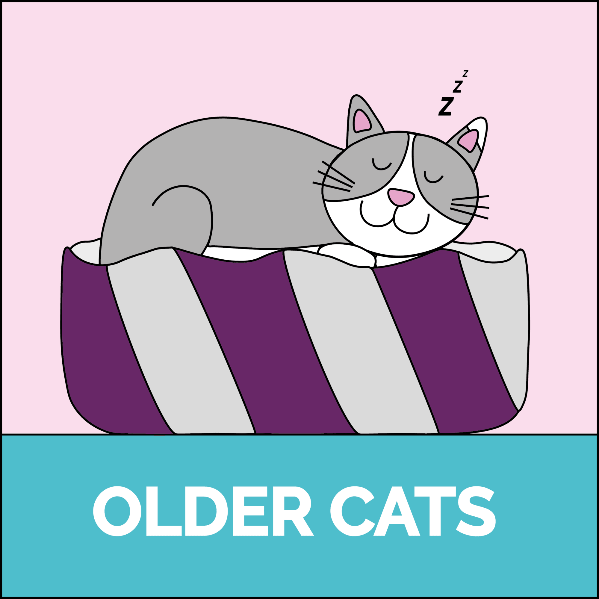 Older cats
