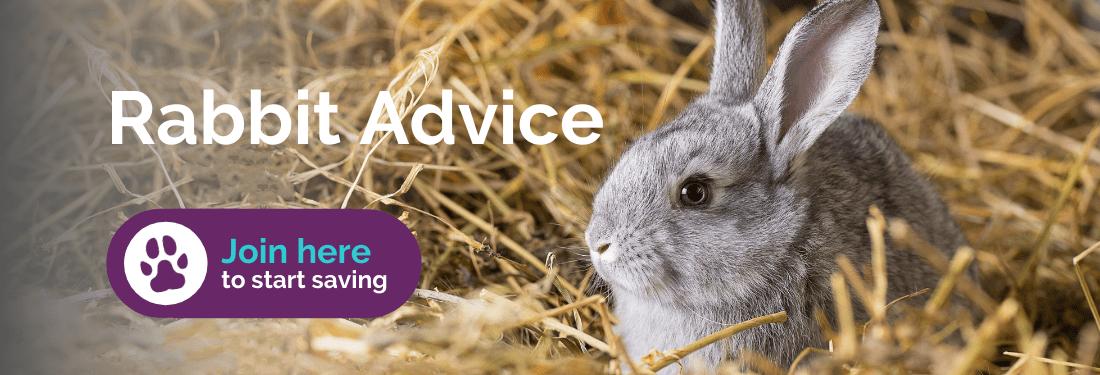 Rabbit advice