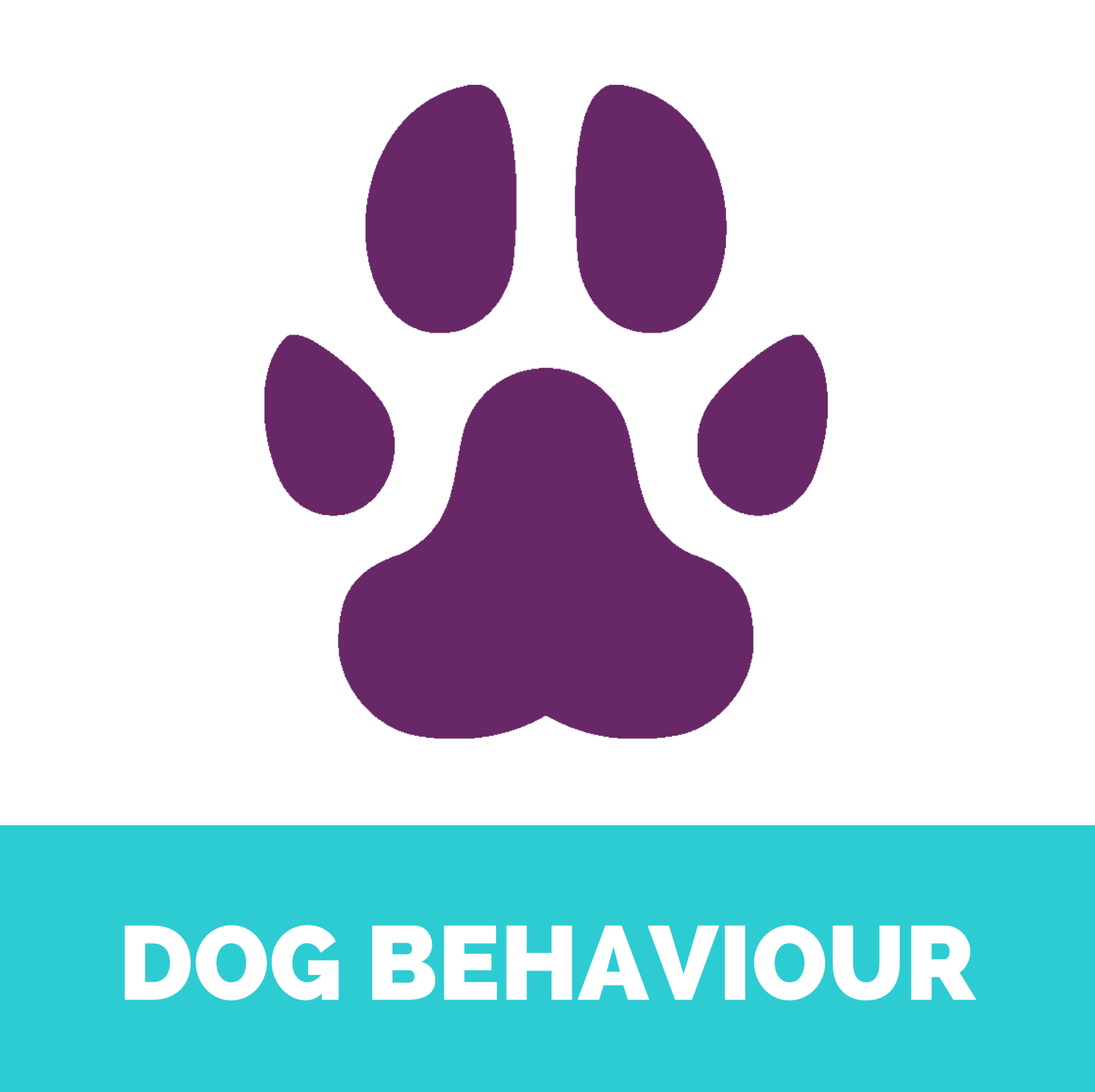 Dog behaviour
