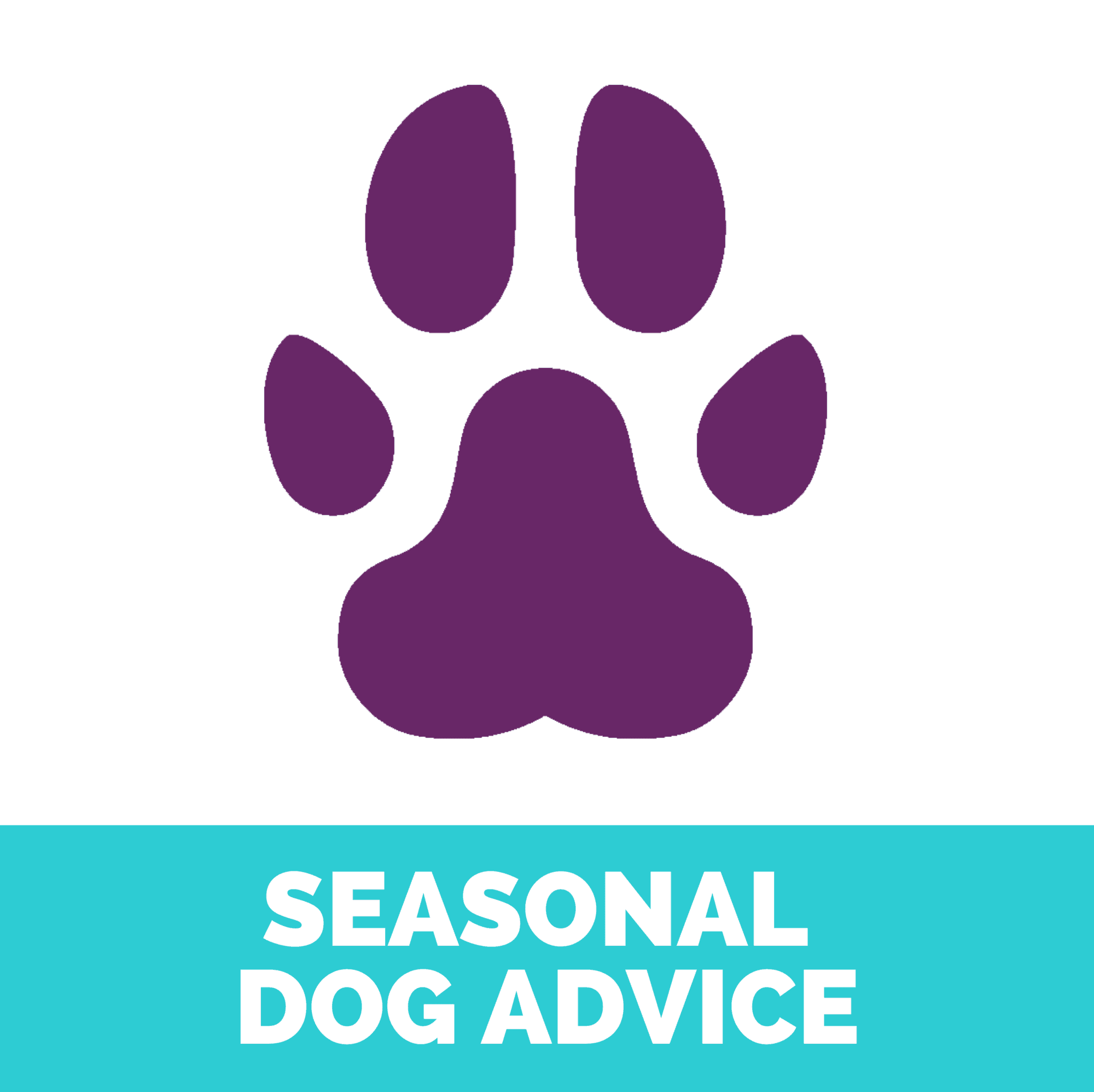 Seasonal dog advice