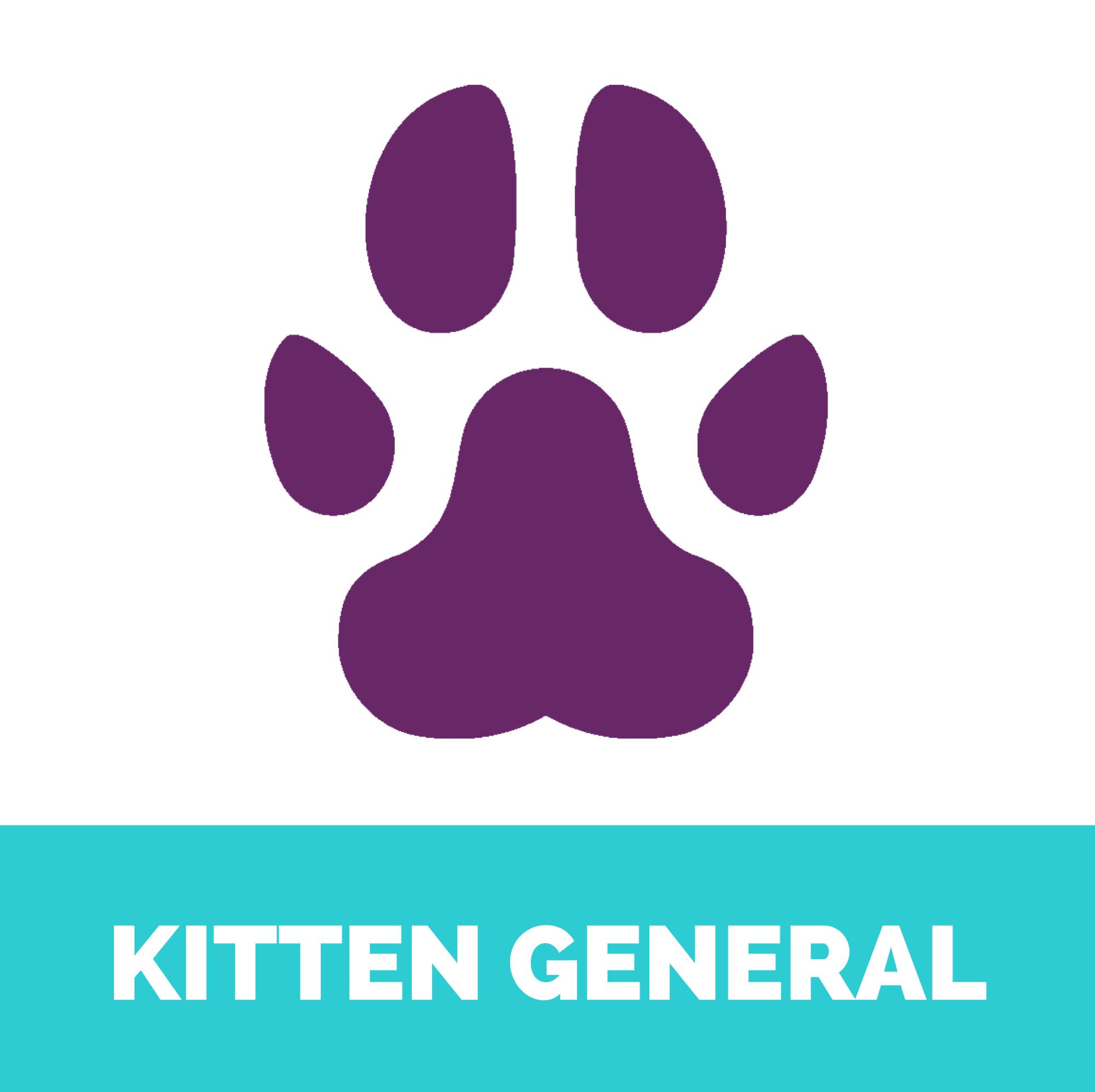 Kitten general