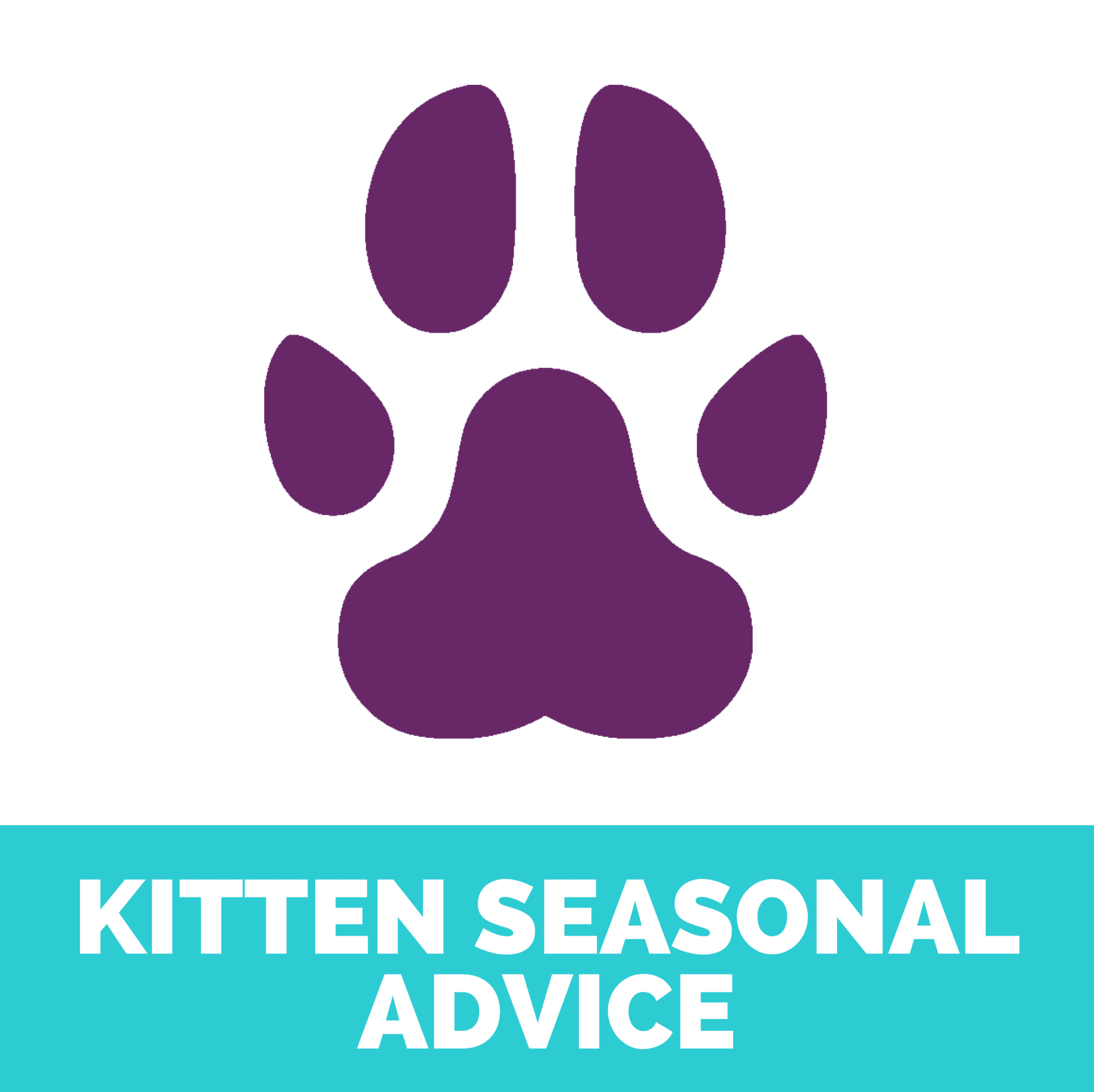 Kitten seasonal advice