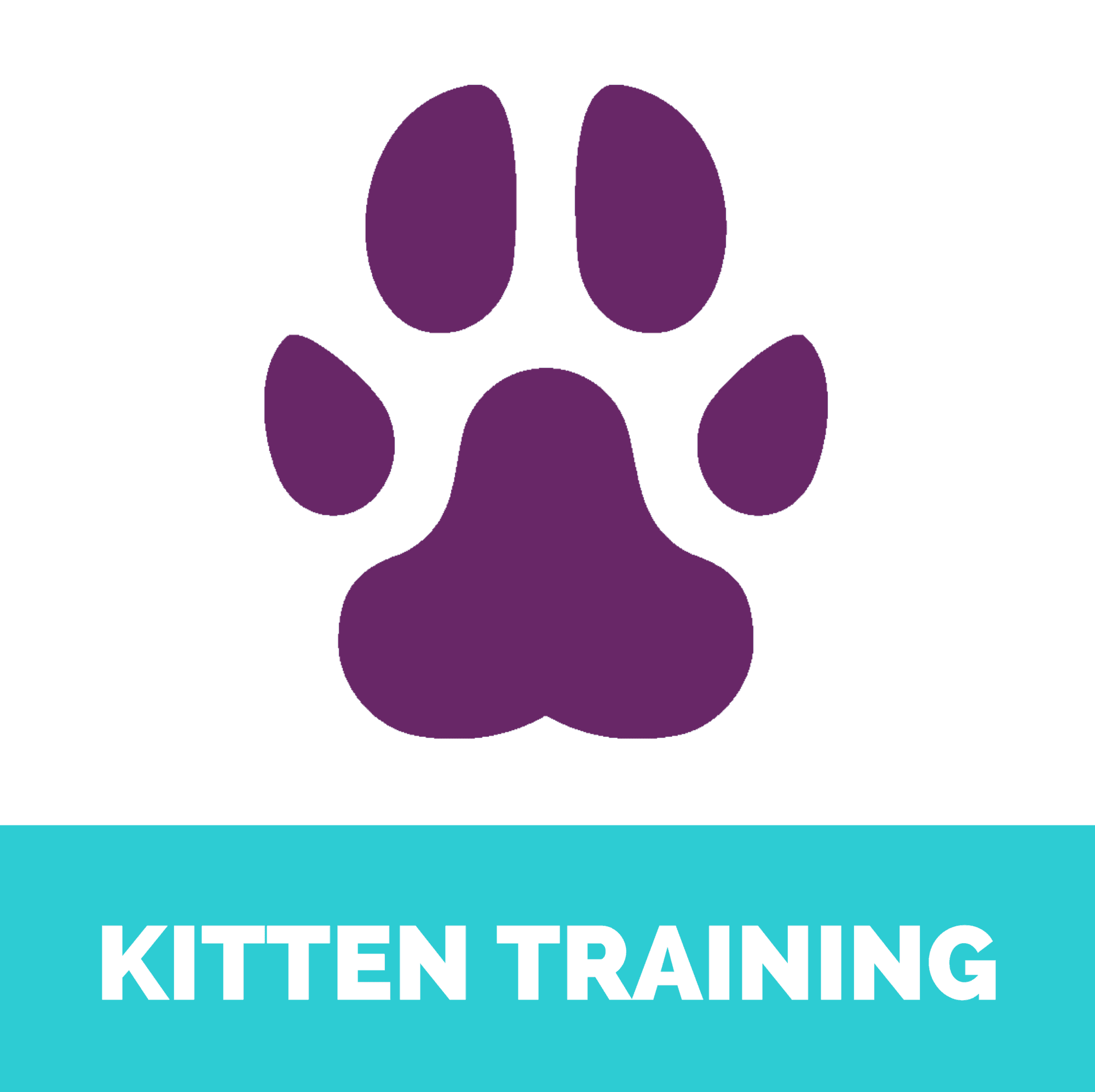 Kitten training
