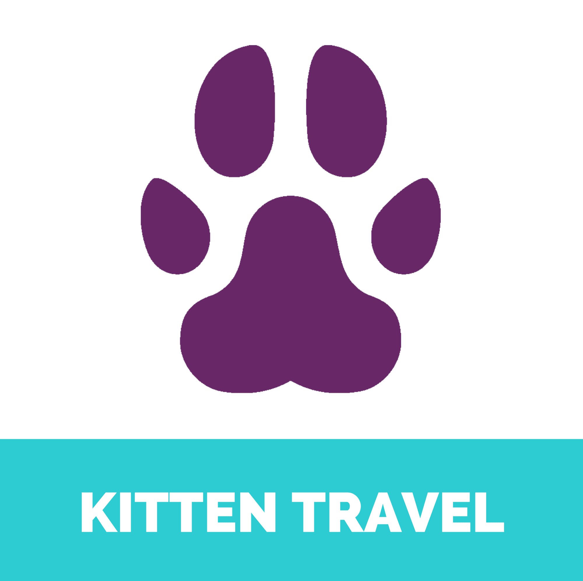 Kitten travel