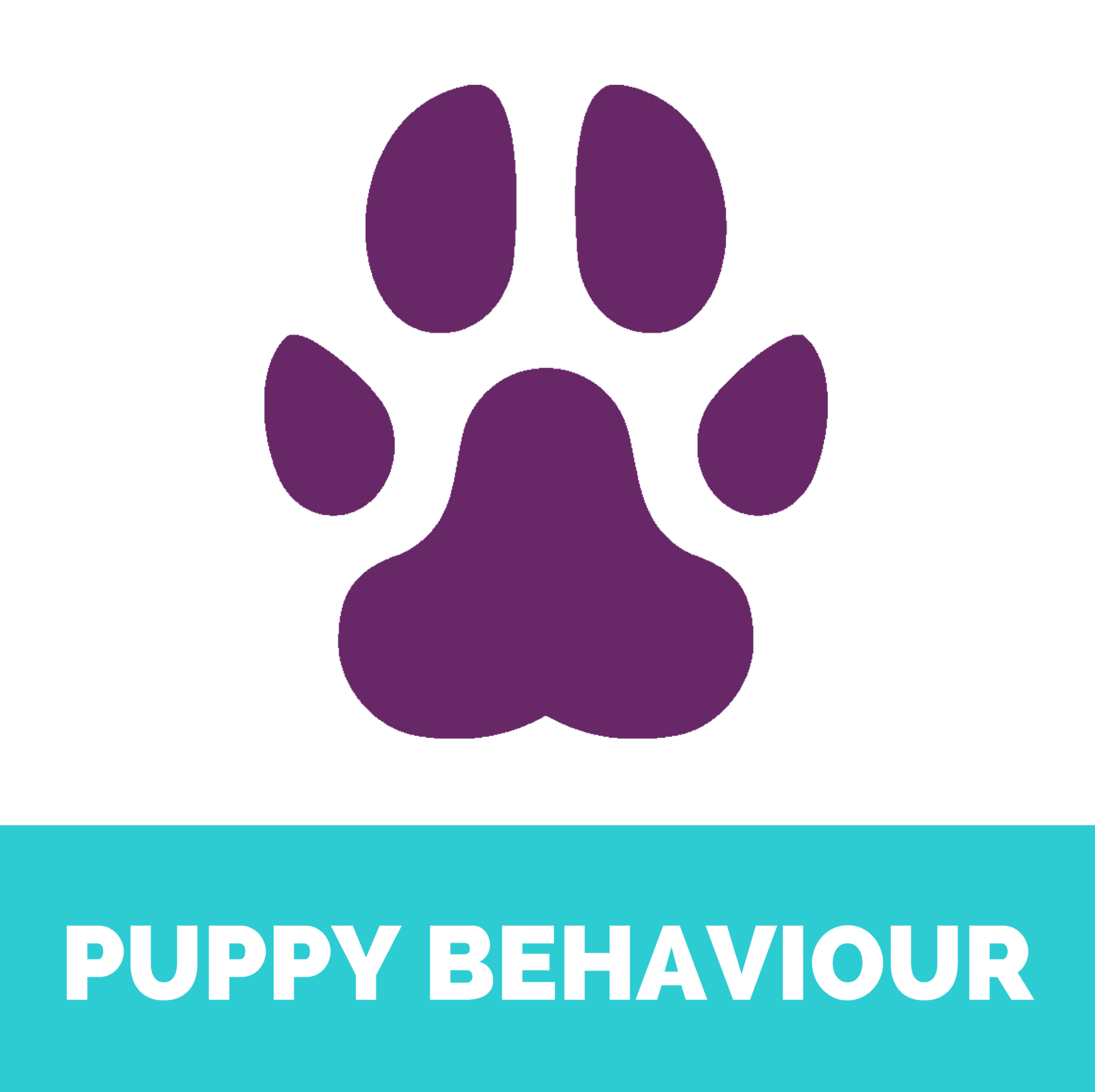 Puppy behaviour