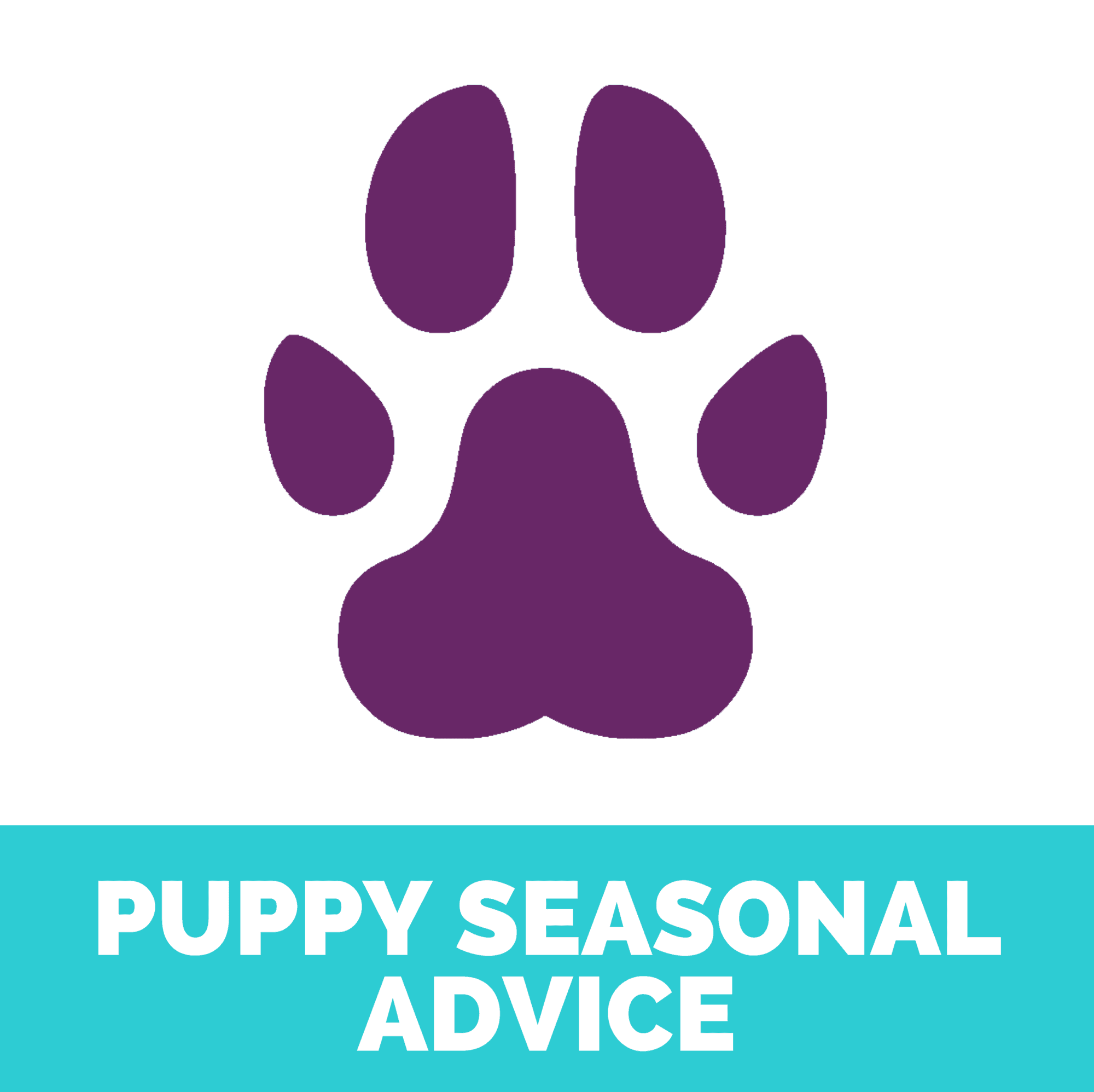 Puppy seasonal advice