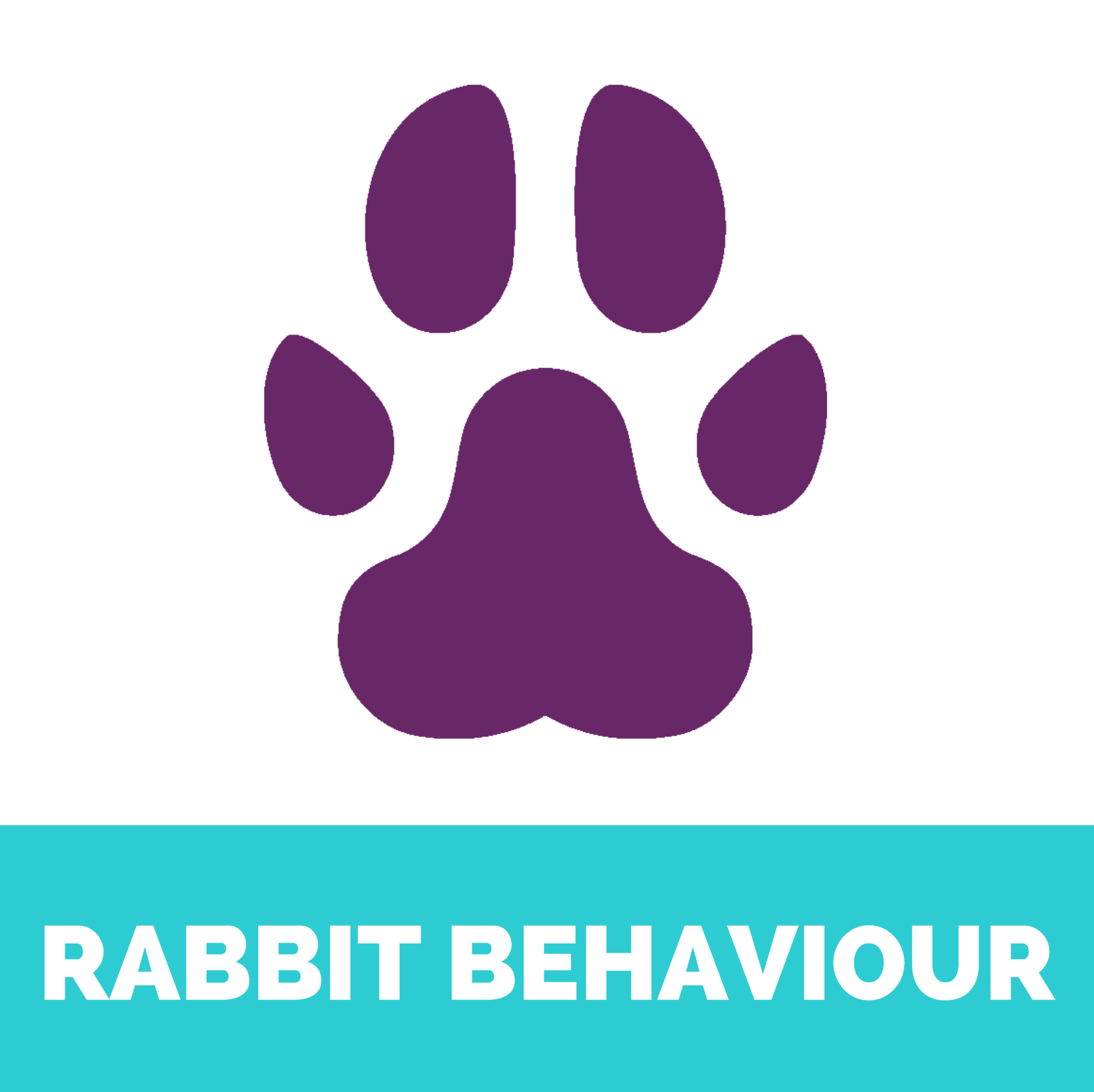 Rabbit behaviour