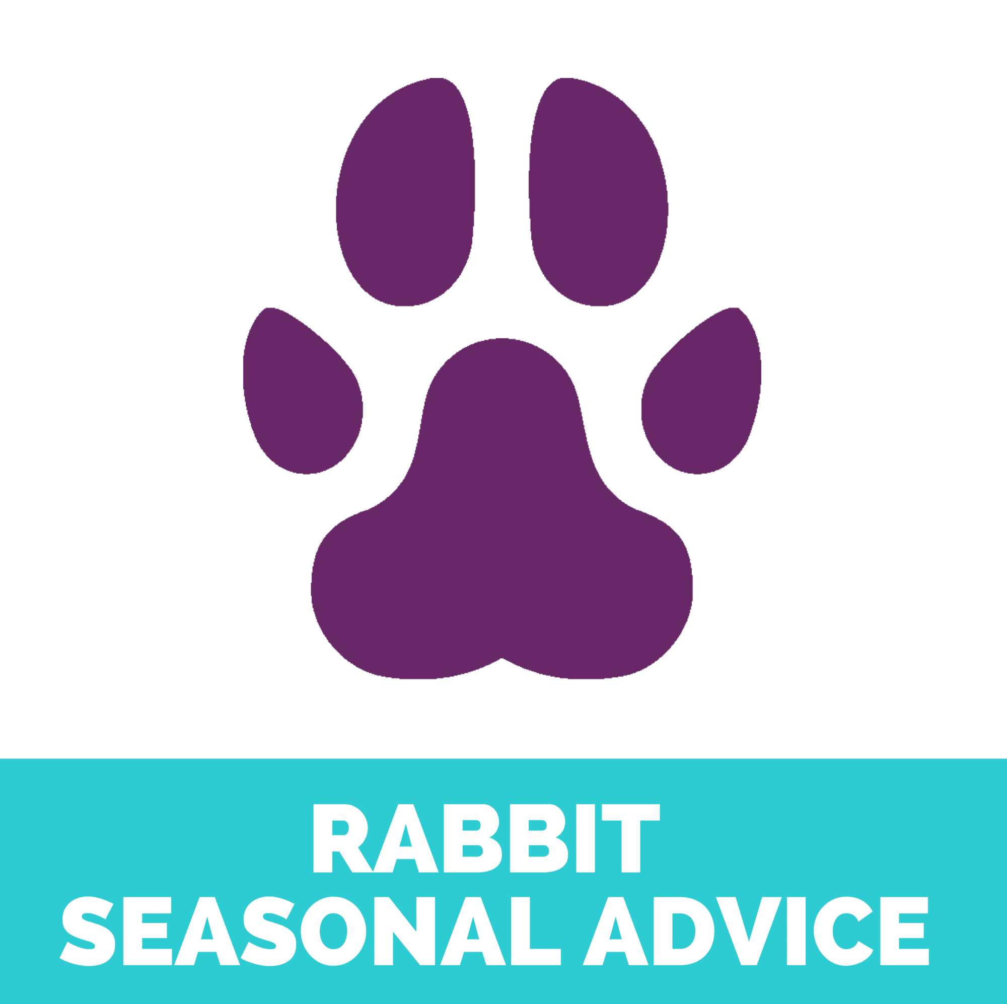 rabbit seasonal advice