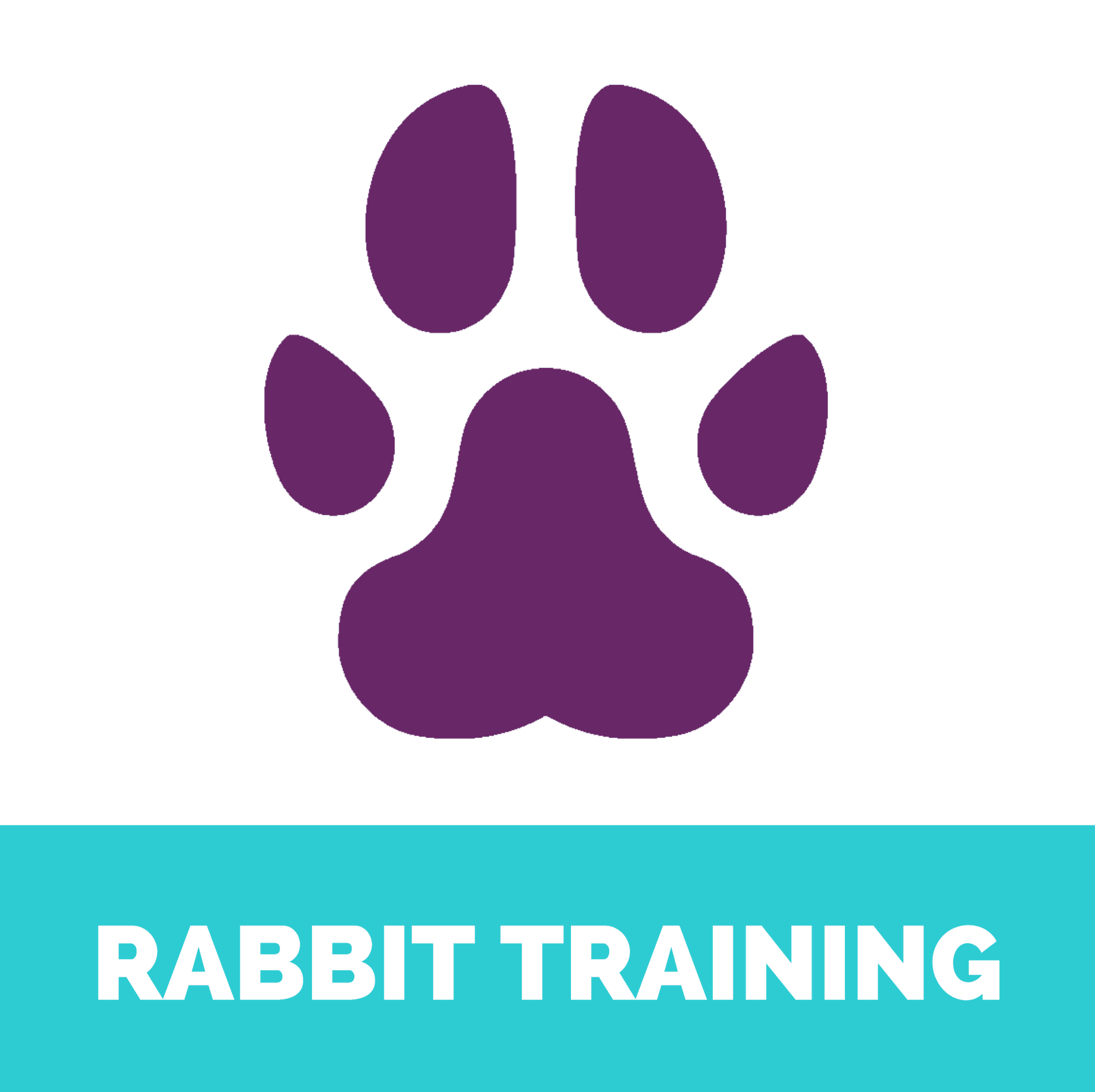 Rabbit training