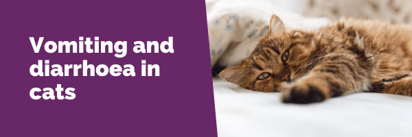 Vomiting and diarrhoea in cats
