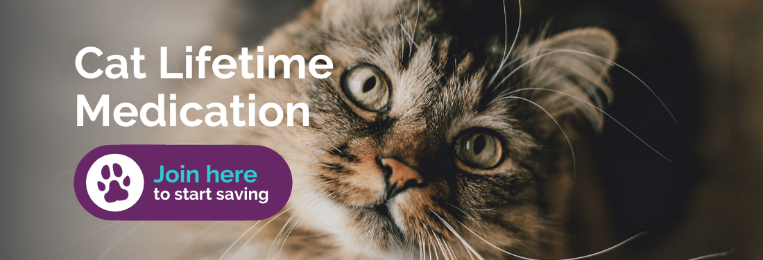 Cat lifetime medication