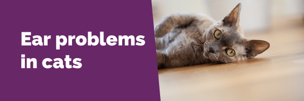 ear problems in cats