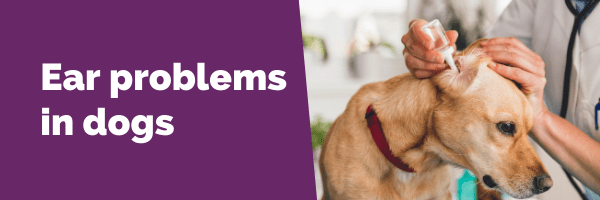 Ear problems in dogs