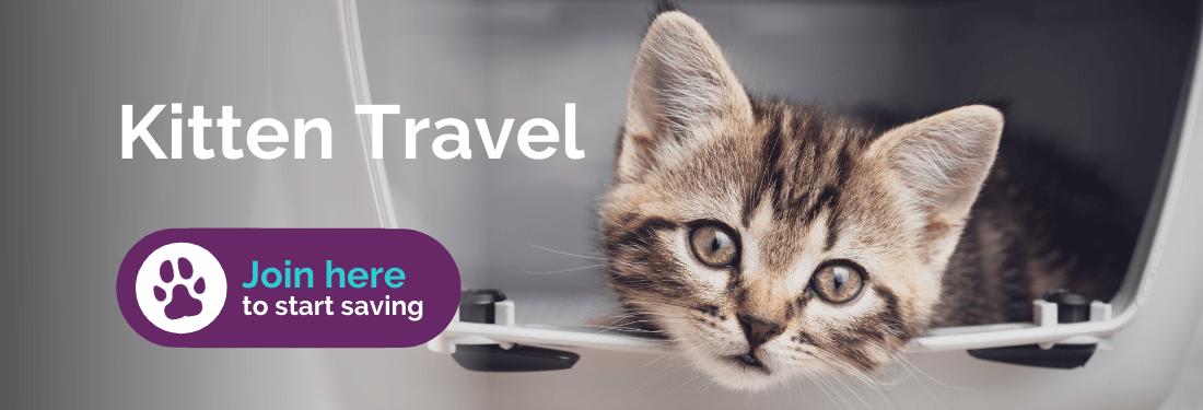 Kitten travel