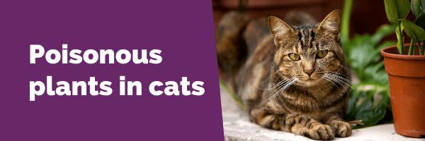 Poisonous plants in cats