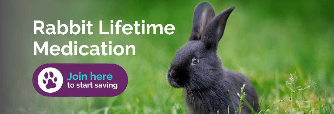 Rabbit lifetime medication
