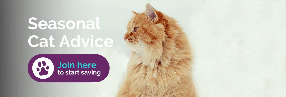 Seasonal cat advice