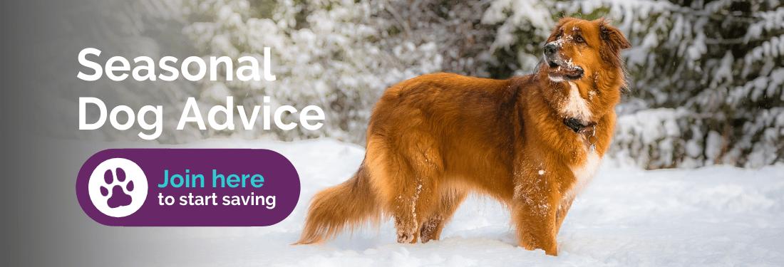 Seasonal dog advice