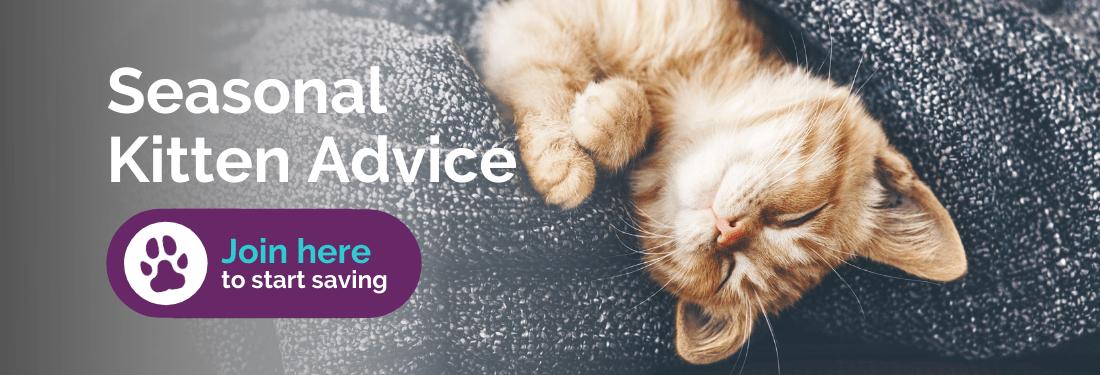 Seasonal kitten advice