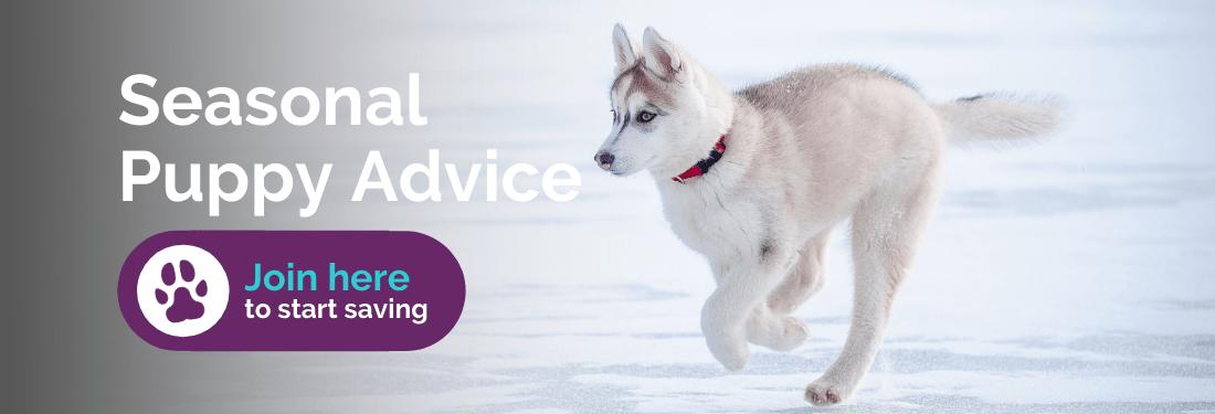Seasonal puppy advice