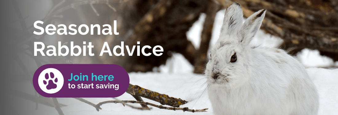 Seasonal rabbit advice