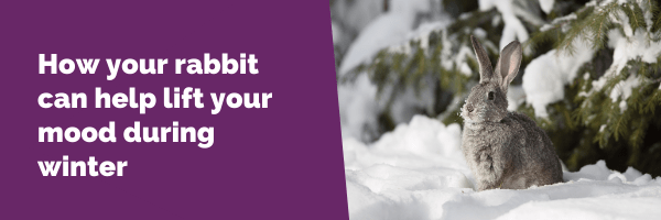 How your rabbit can help lift your mood during winter