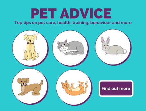Pet advice