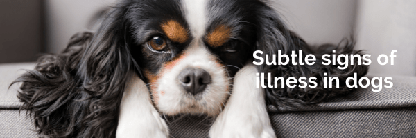Subtle signs of illness in dogs