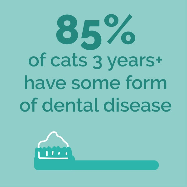 85% of cats 3 years + have some form of dental disease
