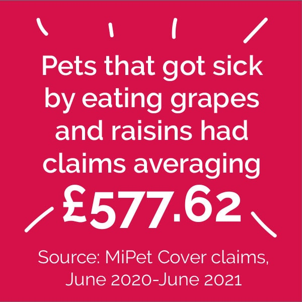 Pets that got sick by eating grapes and raisins had claims averaging £577.62